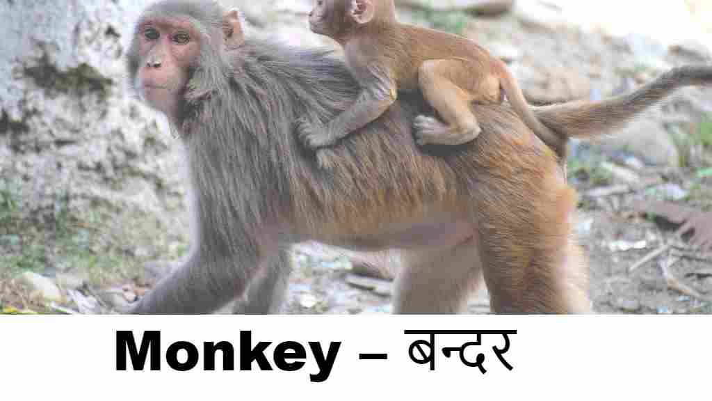 60+ Animals Name in Hindi and English